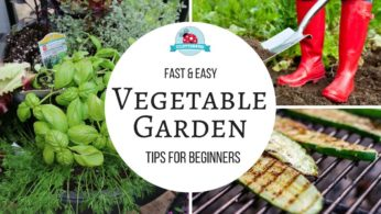 How to Grow a Vegetable Garden – Easy Tips for Beginners