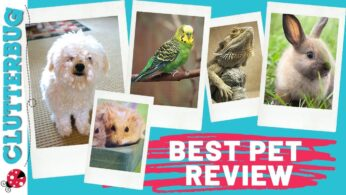 Story Time – Best Pet Review